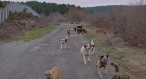İstanbul'un Köpeklerini Anlatan Belgesel Stray, ABD'de İzleyicilerle Buluşacak