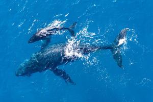 Veri Analiz Şirketine Göre, Balinalar Bu 3 Altcoin'i Biriktiriyor