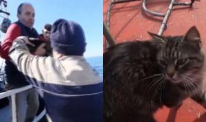Zonguldak'ta kaybolan kedi Tekirdağ'a giderken bulundu: Tekneye binmiş