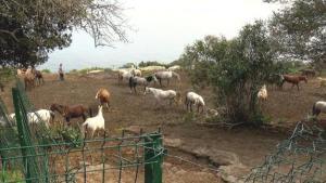 Sucuk Mu Yapıldı? İBB'nin Dörtyol Belediyesi'ne Hibe Ettiği Kayıp Atlarla İlgili Yeni Ayrıntılar
