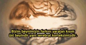 Canlılar Arasında En Gelişmiş Beyne Sahip Olmamızın Sebebini Görünce Çok Şaşıracaksınız!
