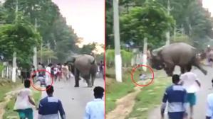 Kışkırttığı fil tarafından feci şekilde ezilerek hayatını kaybetti