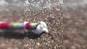 Köpeğin yuttuğu çorap endoskopiyle çıkartıldı