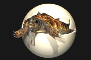 Dinozorlar Devrinde Yaşamış, İnsan Boyundaki Dev Kaplumbağanın Yumurtası Bulundu