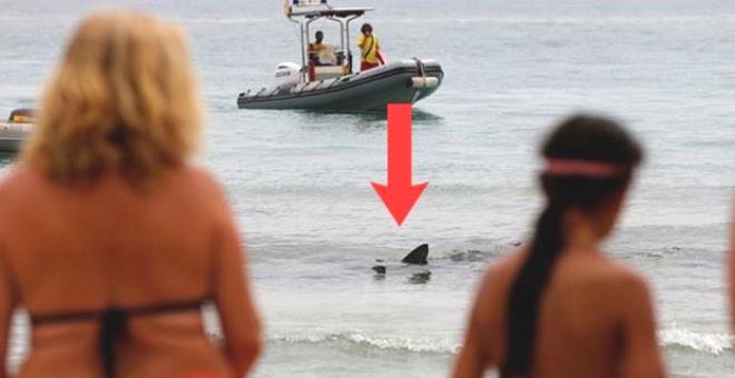 Mavi canavar kumsala kadar geldi! Denizdeki turistler bir anda çığlık çığlığa kaçıştı