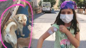 Pendik'te köpeğe mermi yağdırdı! Seken mermi çocuğa isabet etti