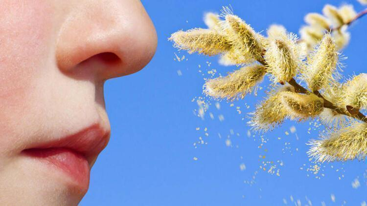 Üzüm otu tehdidi yaygınlaşıyor! Bu güçlü alerjen…