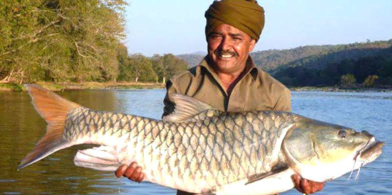Ghillie holding a fish, belongs to Wildlife Association of South India. It's the endemic Humpbacked Mahseer