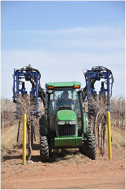 Vineyard Pruning Done With Both Man and Machine