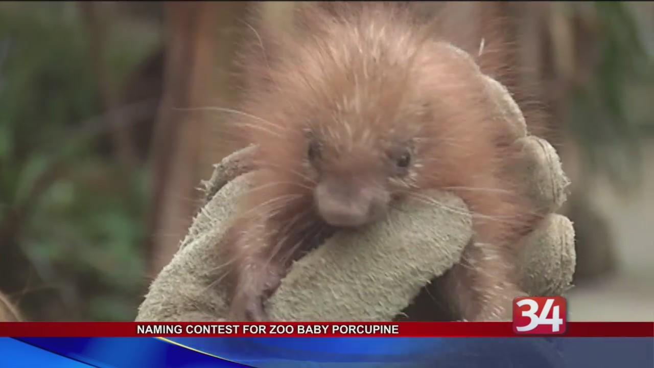 Help_the_Binghamton_Zoo_name_the_porcupe_0_20180315215637