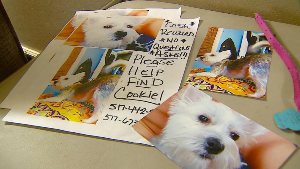 Cookie the dog missing photos 053019_1559245735709.jpg-873702558.jpg