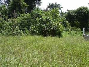 The original backyard: chest-high in lalang and swamp beyond
