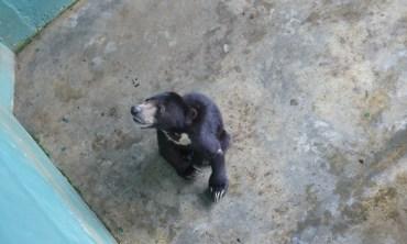 Lonely sun bear