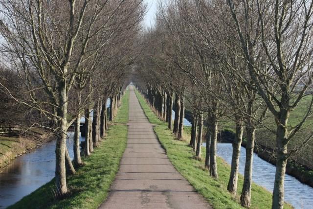 Beemster in Beeld - Weg met bomen