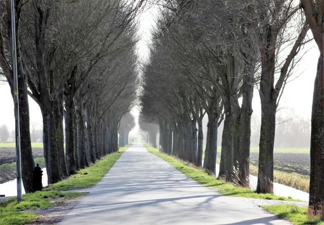 Beemster in Beeld - Jisperweg richting Zuiddijk