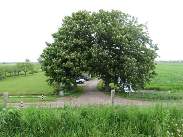 Beemster in Beeld - Bomen