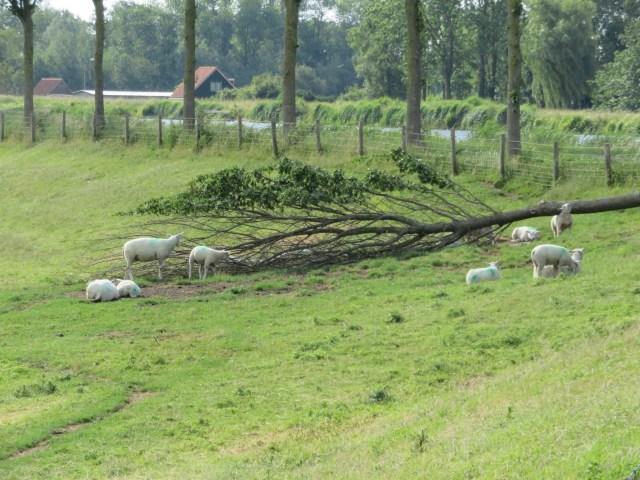 Beemster in Beeld - Storm schade