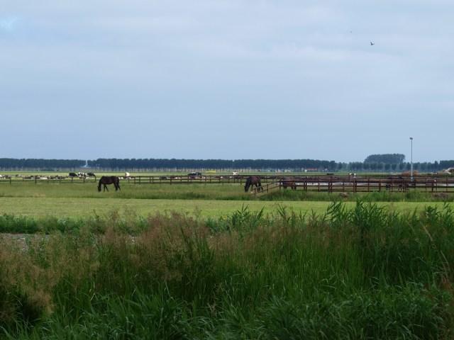 Beemster in Beeld - Landschap met paarden vanaf de Jisperweg
