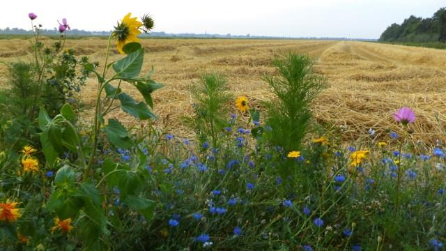 Beemster in Beeld - Bloemen