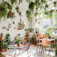 Wildernis Amsterdam plant store for Urban Jungle lovers!