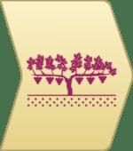 自然派オーガニック・ワインから見たワインの造り方|土壌・ブドウ畑