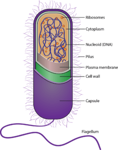 Inside a bacteria microorganism