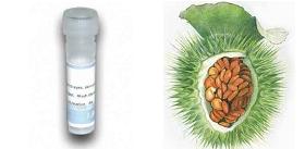 Datura-stramonium-Jimson-weed-Lectin