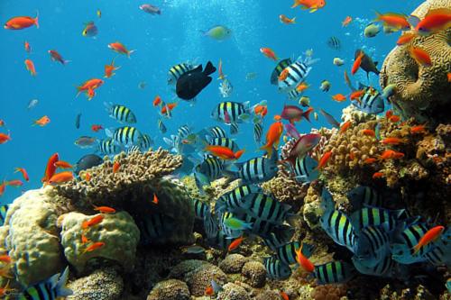species diversity के लिए चित्र परिणाम