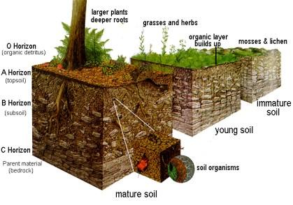 Rocks & Soil Lesson Plans, Worksheets, Printables