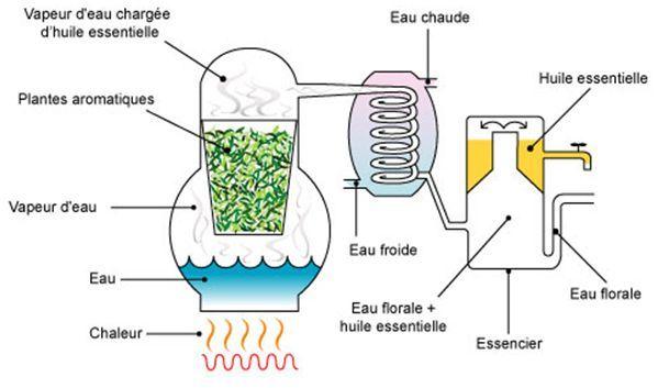 """Résultat de recherche d'images pour """"distillation huiles essentielles"""""""