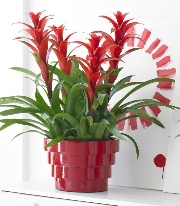 15 Plantes Qui Nont Pas Besoin De Soleil Bio La Une