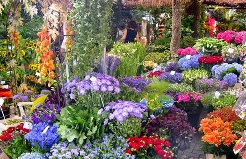 netherlands-flower-shop