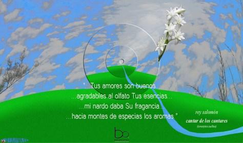 el nardo, esa flor aromática mexicana es conocida por el rey salomón hace cerca de 3,000 años y es mencionada en el cantar de los cantares, el libro místico más elevado