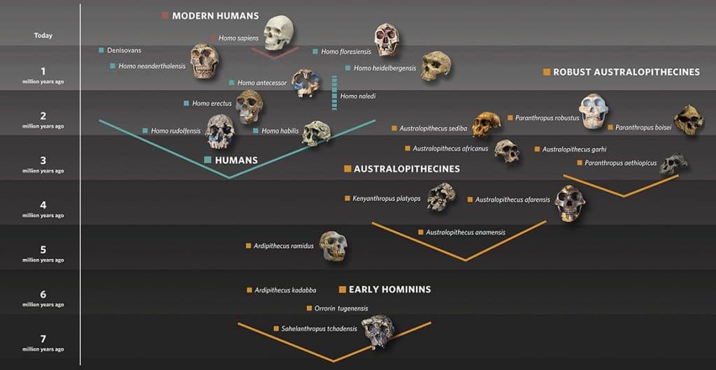 Homo sapiens, 300.000 1