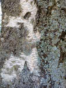 Conoce a los árboles 10