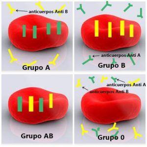 Los grupos sanguíneos 2