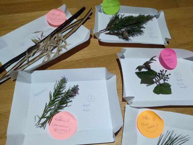 Prácticas reino plantas