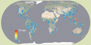 Combining data from bird species with small ranges and significant threats shows scientists where to prioritize conservation efforts, and therefore prevent extinctions. (Click for full size image. Courtesy of Dr. Clinton Jenkins, www.biodiversitymapping.org)