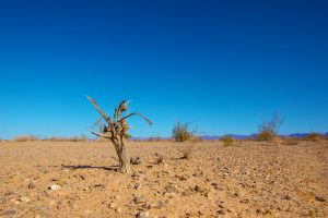 photo of desert scene with reddish dry ground and deep blue sky with dead tree in foreground
