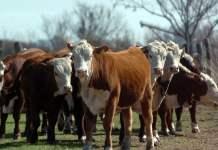 Para Trigo, la ganadería argentina tiene indicadores de sustentabilidad muy buenos a nivel global.