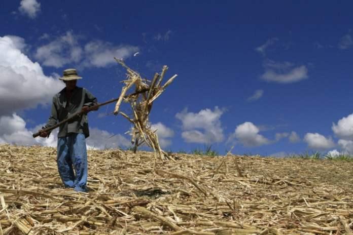 De locos: generan biomasa a partir de energía proveniente del queso