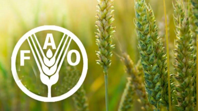 Para 21/22 FAO pronostica un mercado holgado para los cereales y ajustado para las oleaginosas