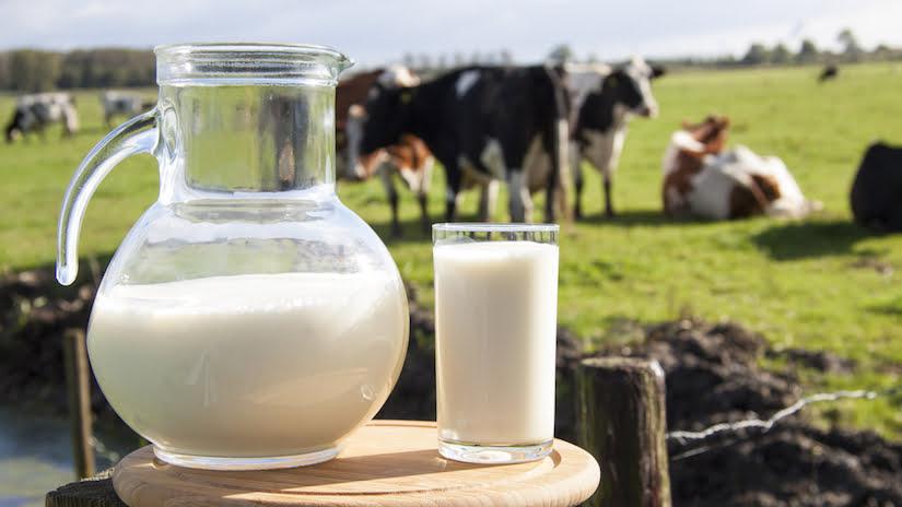 IICA apoya al sector lechero de Centroamérica para fortalecer sus capacidades tecnológicas y aumentar su productividad