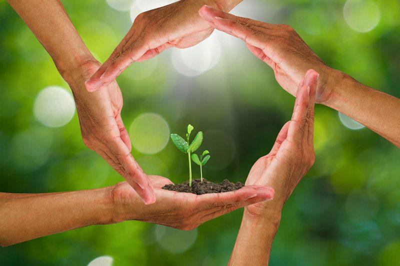 Terraton, la iniciativa para revertir el cambio climático con prácticas agrícolas sostenibles