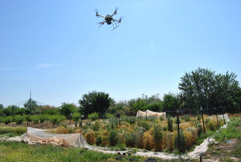 Emplean drones para seleccionar el cereal más apto para producir bioetanol