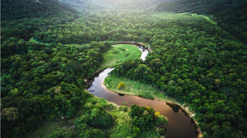 Premio Nobel brasileño dice que la bioeconomía es clave para salvar Amazonia