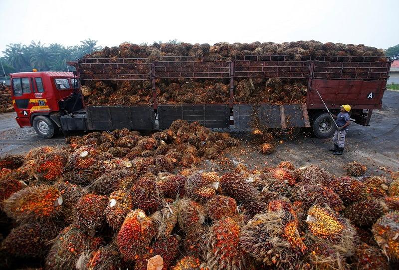 Malasia apuesta por la oleoquímica vegetal
