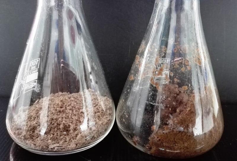 El INTA ya tiene su biblioteca de enzimas para producir bioetanol