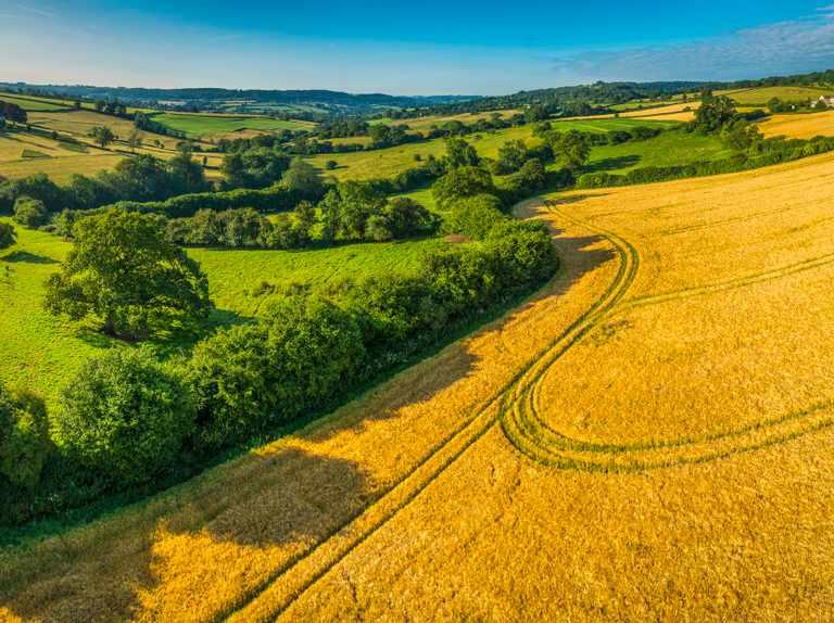 Reino Unido: Prestigioso científico pide dejar la mitad de las tierras cultivables sin producir