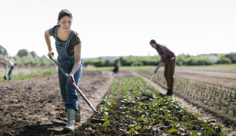 El IICA y Corteva impulsan discusión pública en Colombia para mejorar la situación de la mujer rural